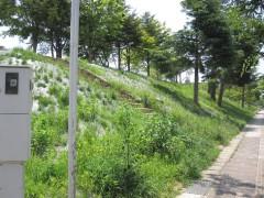 公園表土改善業務(蓬菜中央公園)(福島県)