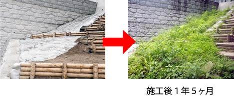 現地植物による緑化を図りたい③