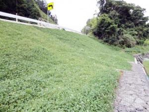3.ロンケットワラ28のホワイトクローバー一種配合について(島根県松江市)
