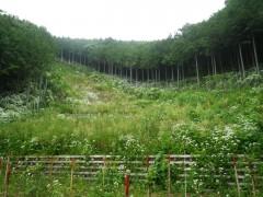 平成25年度和留沢第2保安林整備事業(神奈川県)