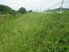 平成28年度 土器川上流維持工事(香川県)