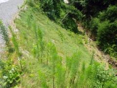 平成28年 林業専用道開設事業 白尾谷線(林業専用道整備)(鹿児島県)