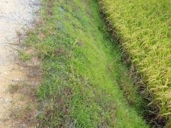 農業競争力強化基盤整備事業 田万川地区農地整備工事(区画整理)(山口県)