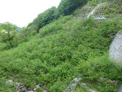 県道赤崎大山線道路災害復旧工事(改良工区)(23年災284号)(鳥取県)