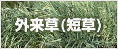 外来草(短草)